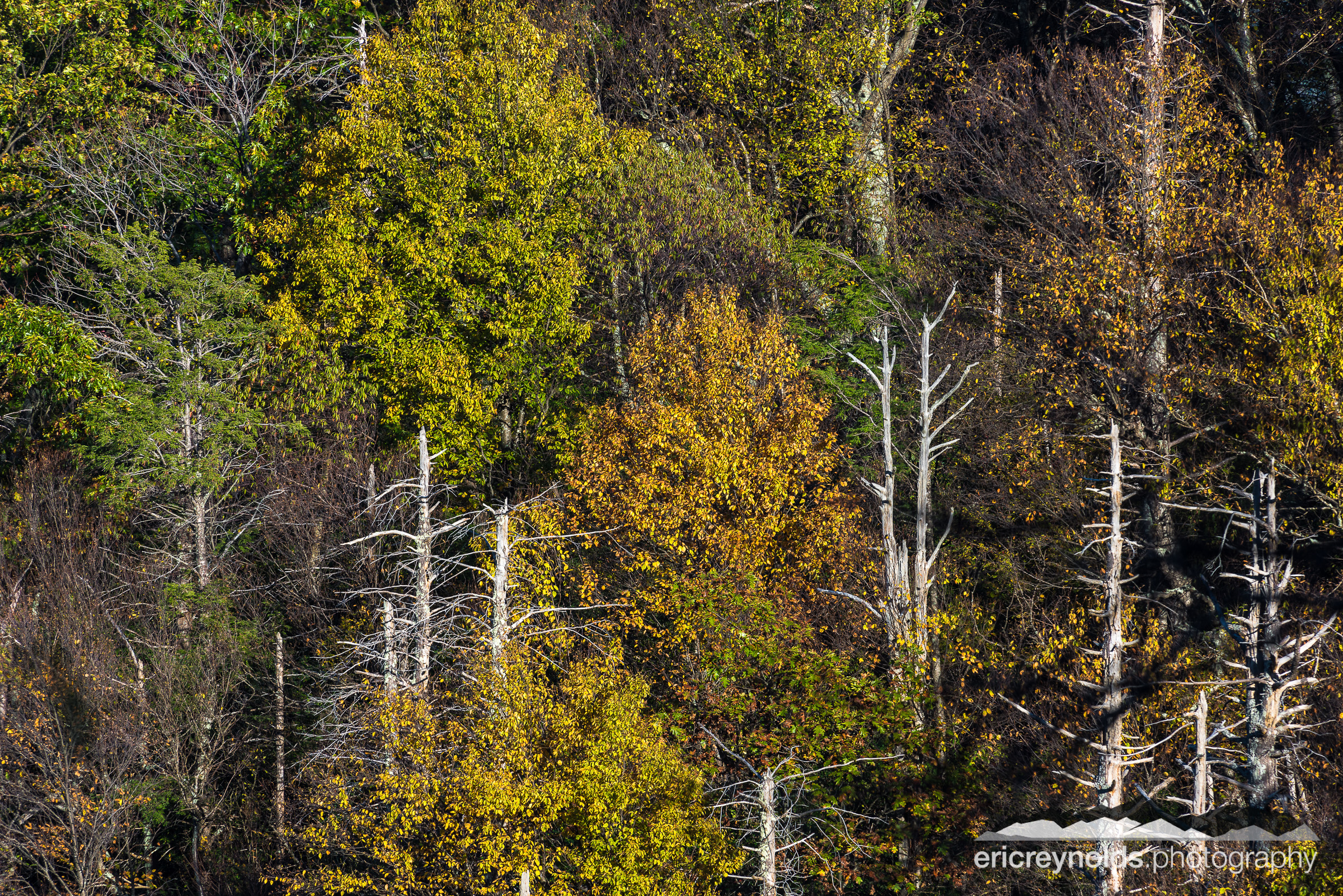 Autumn Trees by Eric Reynolds - Landscape Photographer