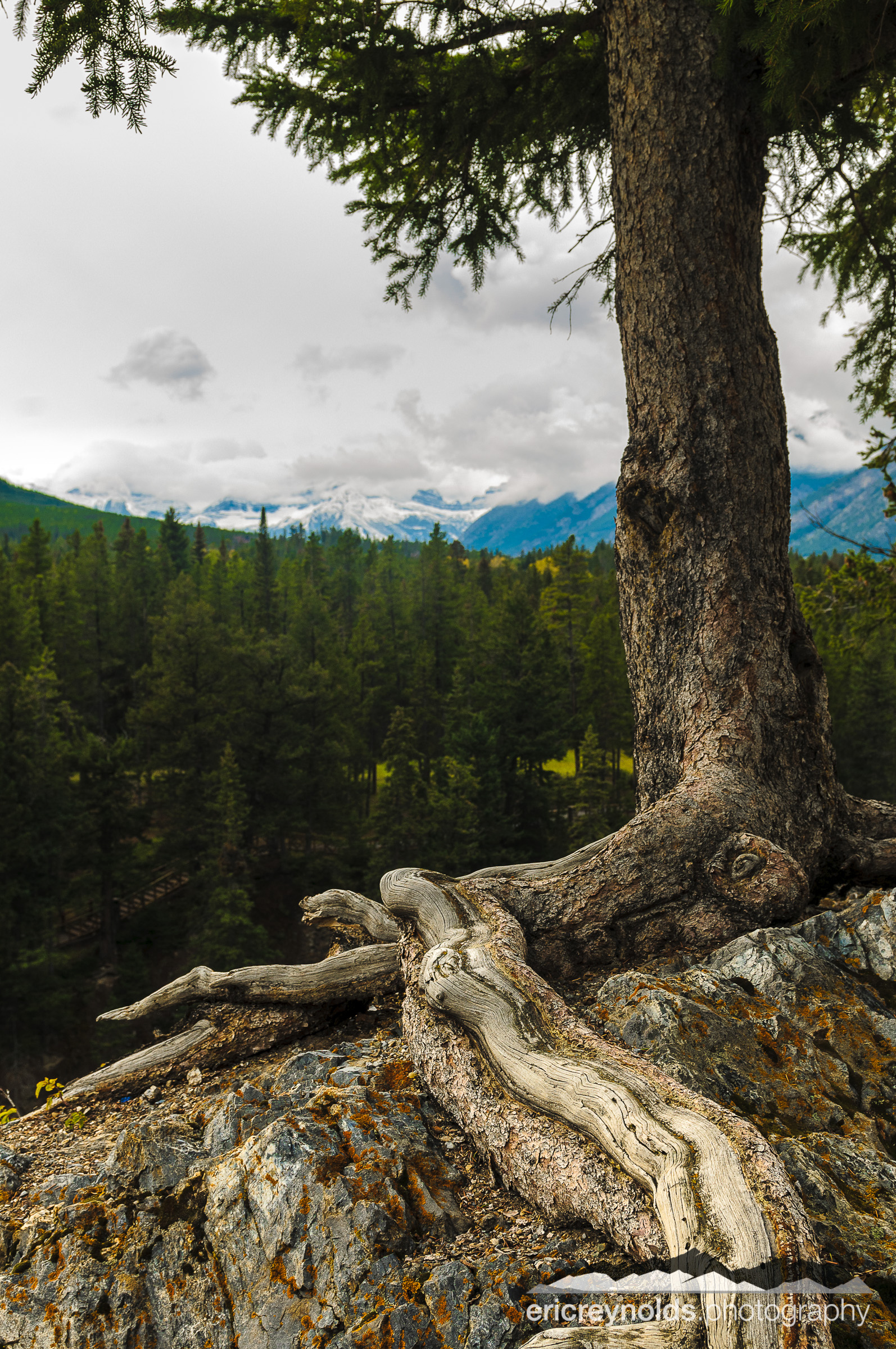 Detail of Tree and Mountains by Eric Reynolds - Landscape Photographer