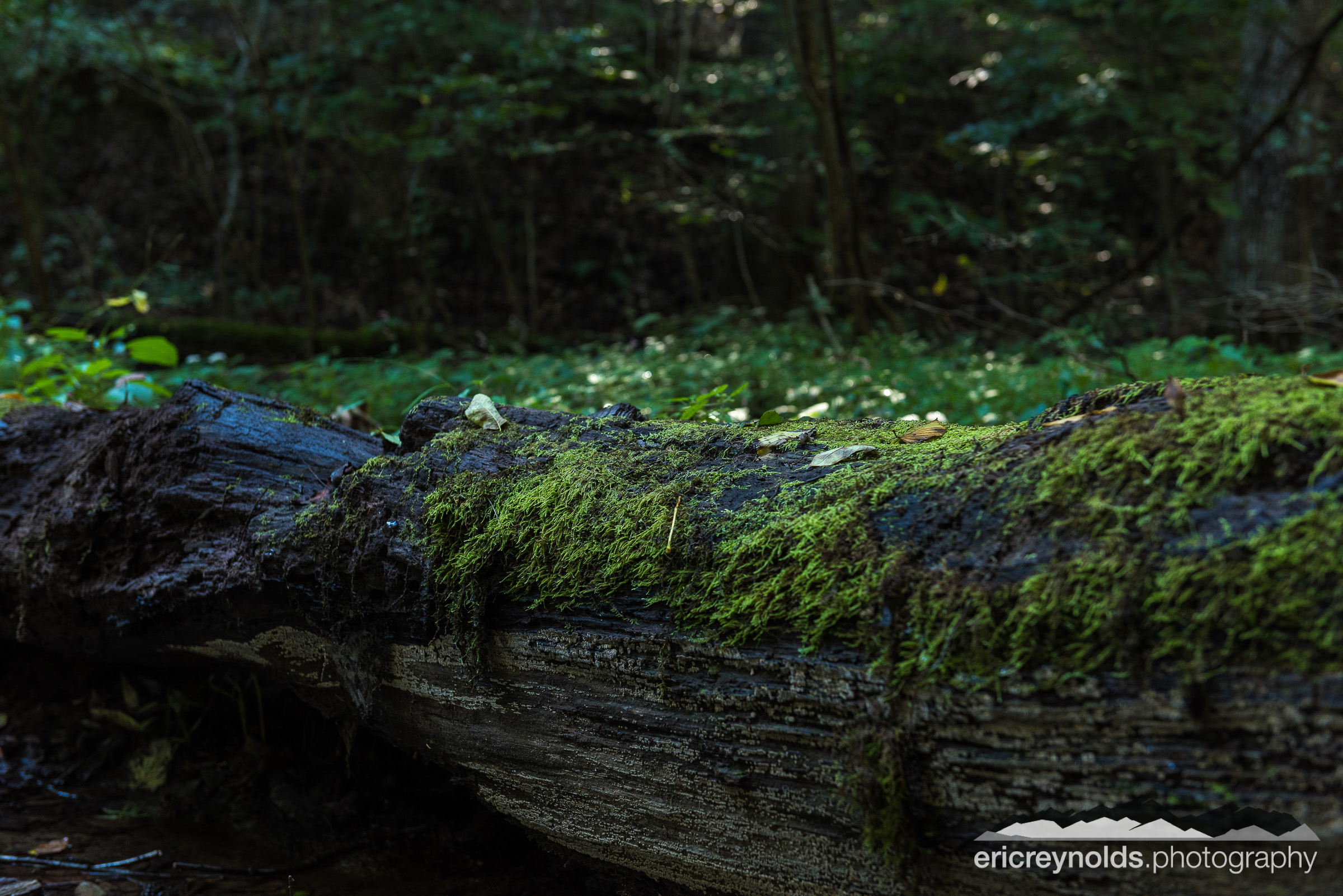 Moss Covered Log by Eric Reynolds - Landscape Photographer