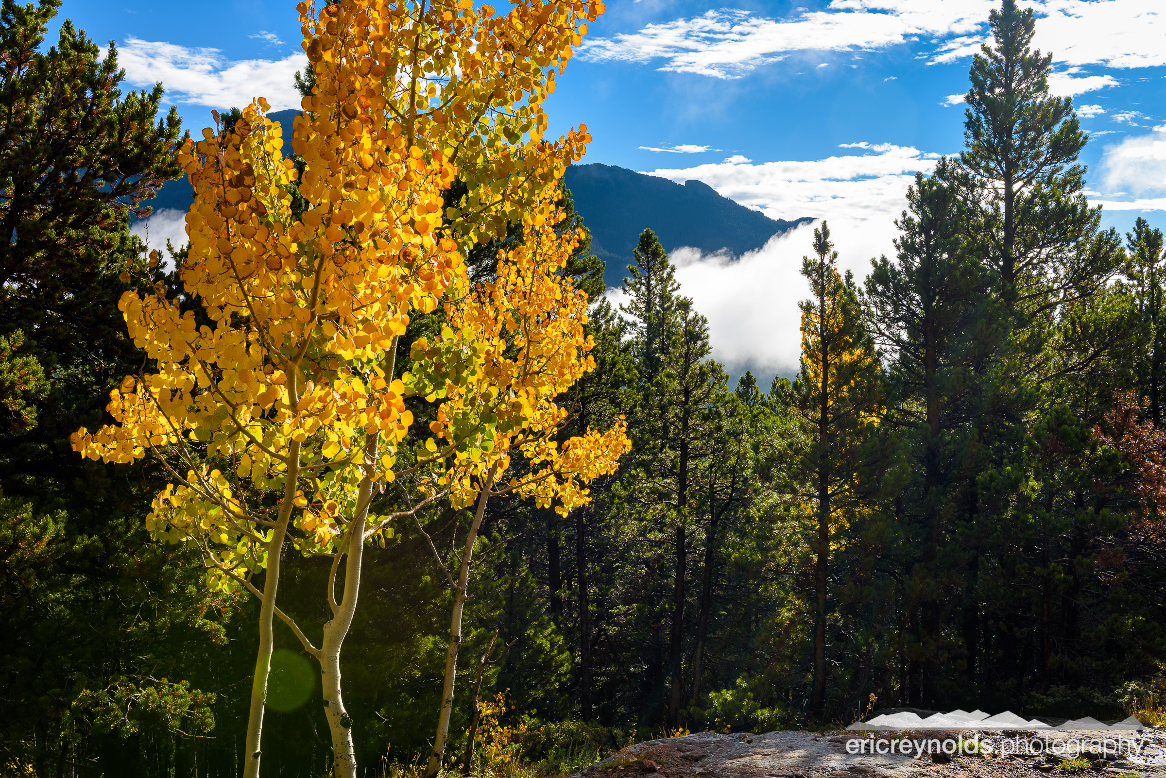 Mountain Aspen by Eric Reynolds - Landscape Photographer
