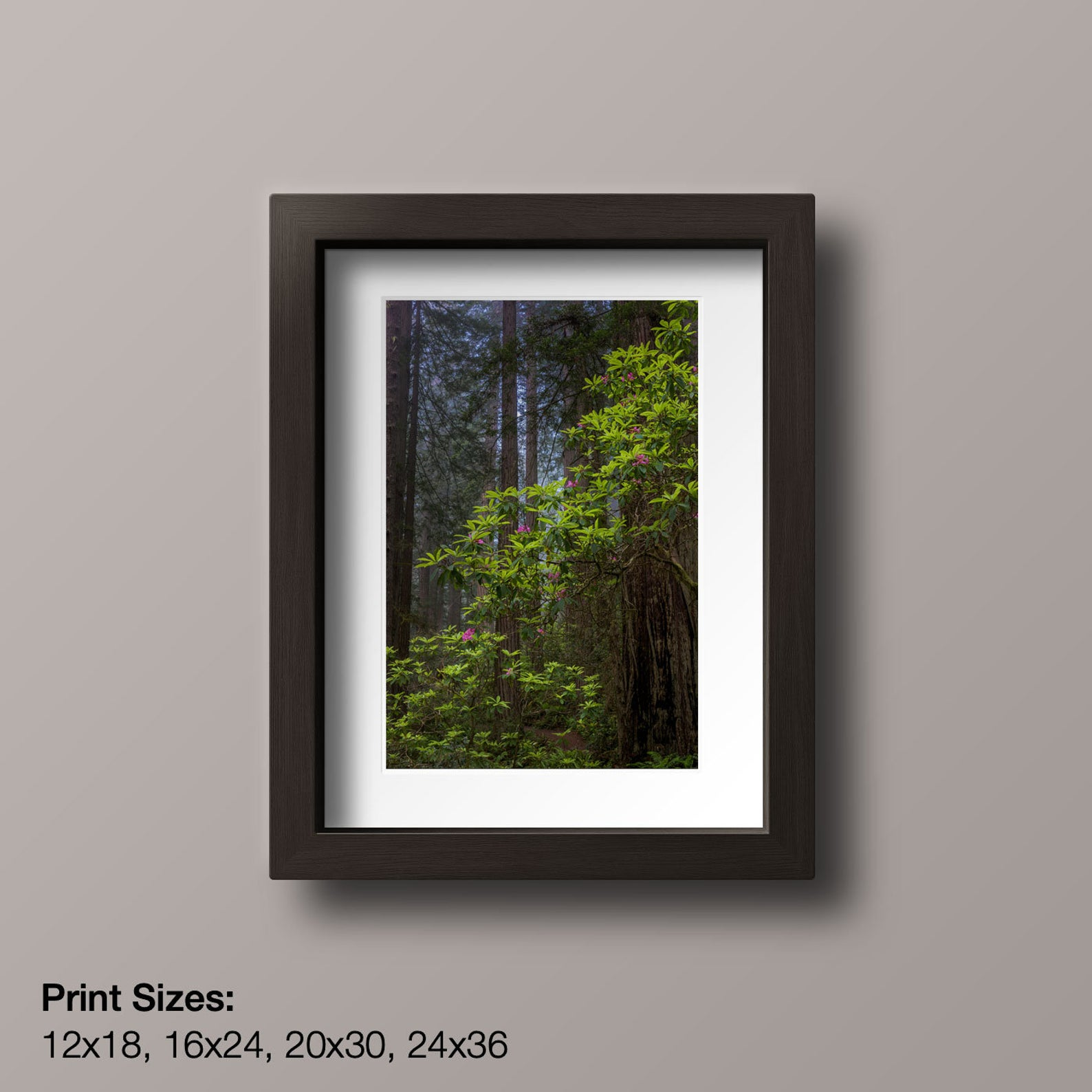 Redwoods and Rhododendron by Eric Reynolds - Landscape Photographer