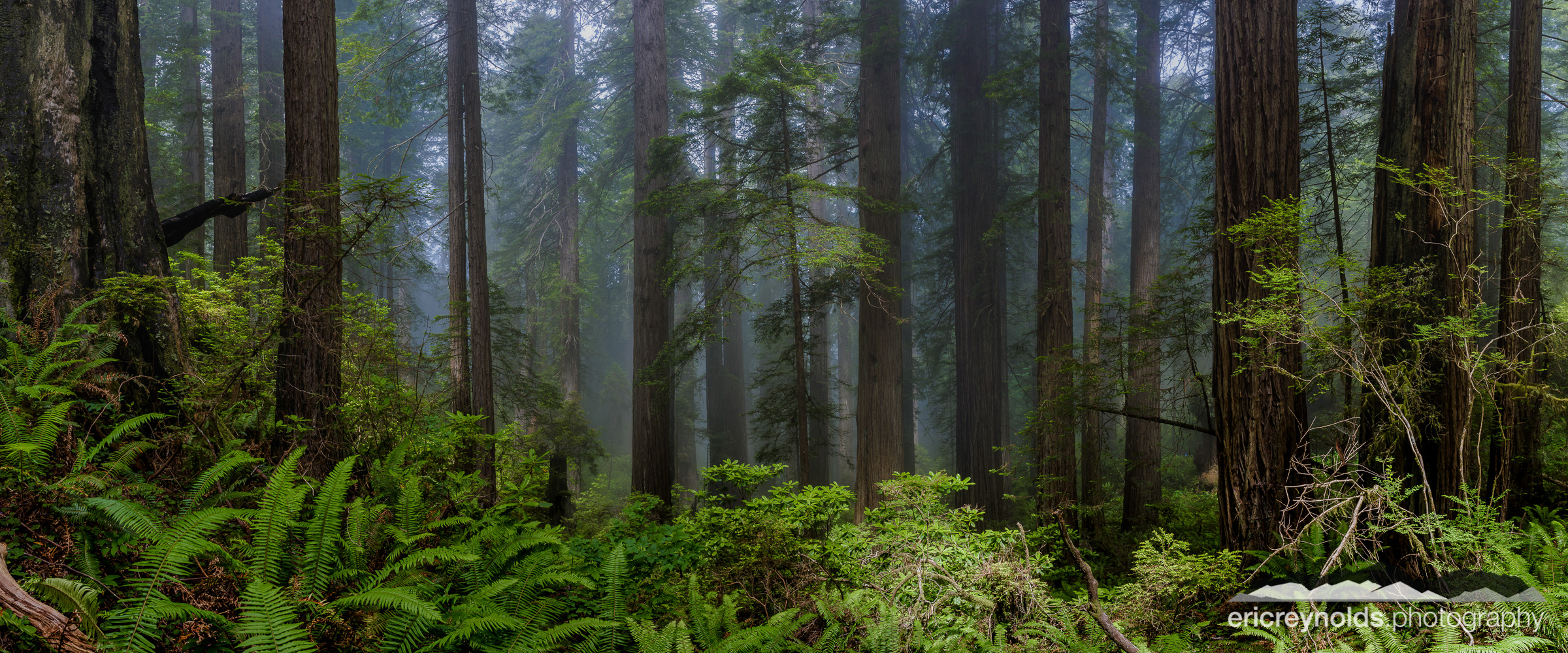 Redwoods in the Mist by Eric Reynolds - Landscape Photographer